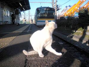 Ougimachi_002